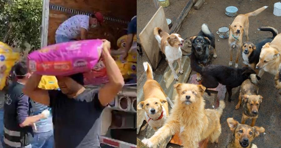 perros alimento animales