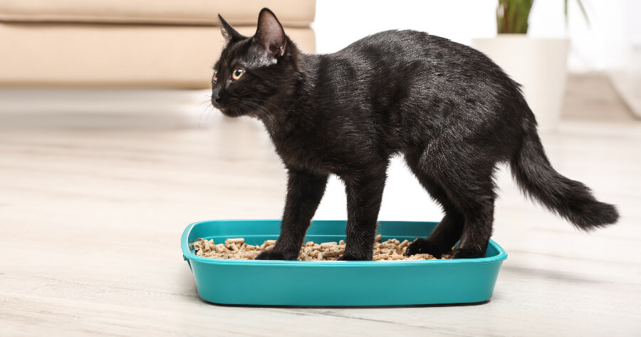 gato negro en el arenero