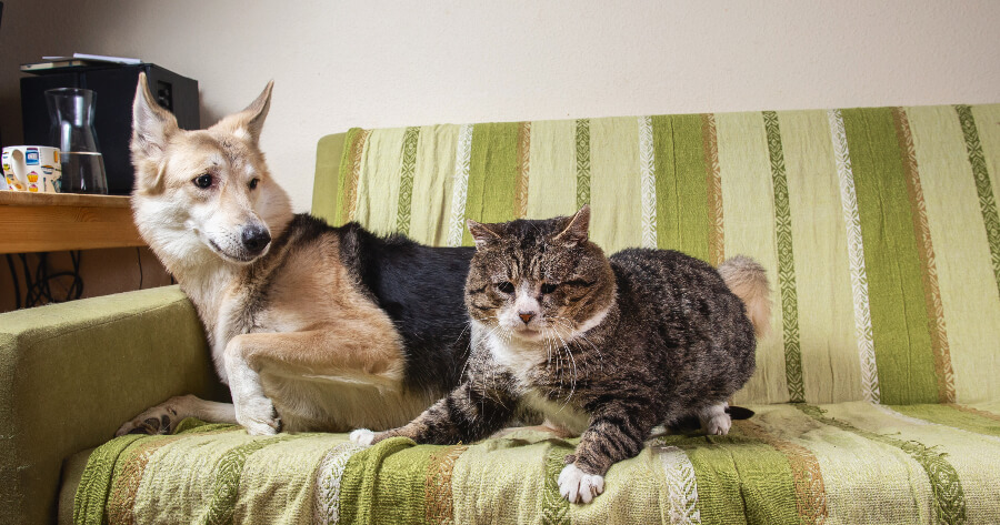 gato y perro en el sillón