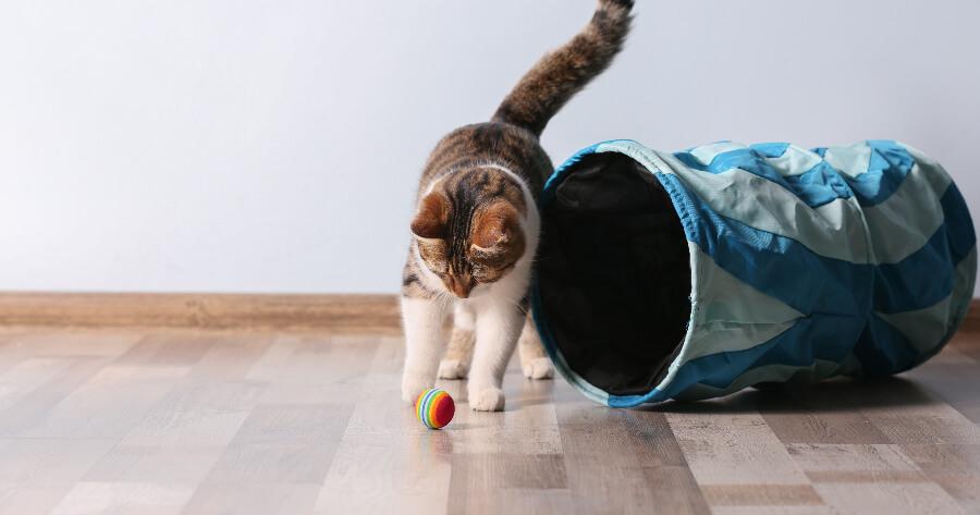 gato jugando con pelota