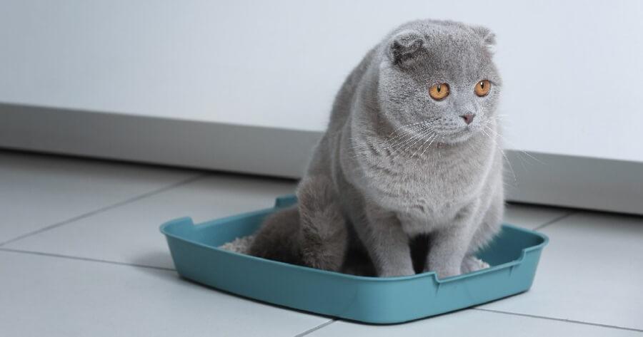 gato en el arenero