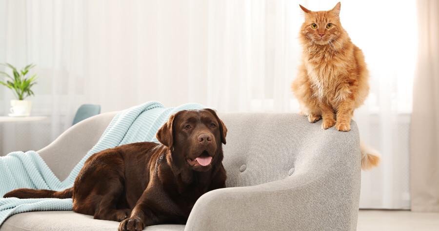 perro y gato en el sofá