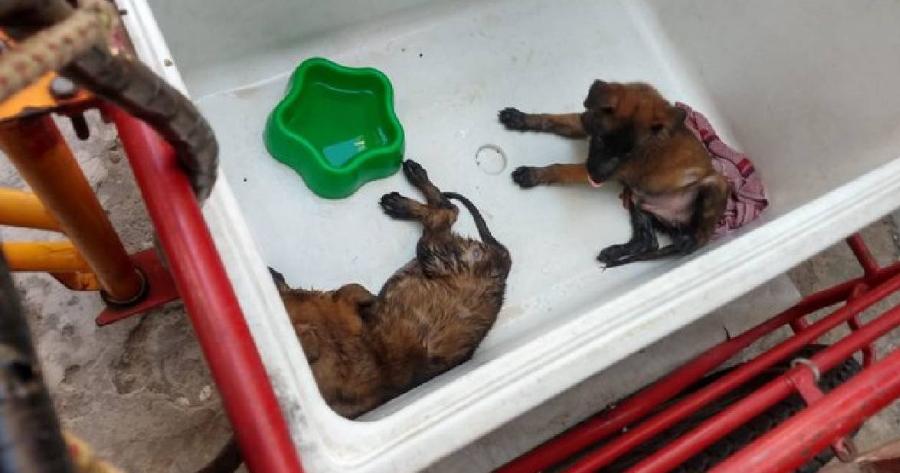 perros hielera veracruz