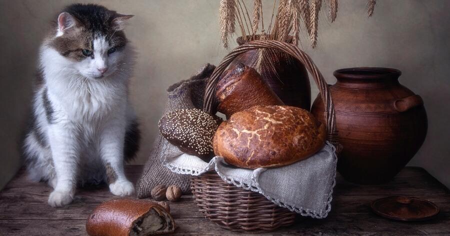 gato pan trigo