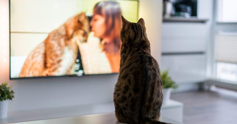 gato viendo tele