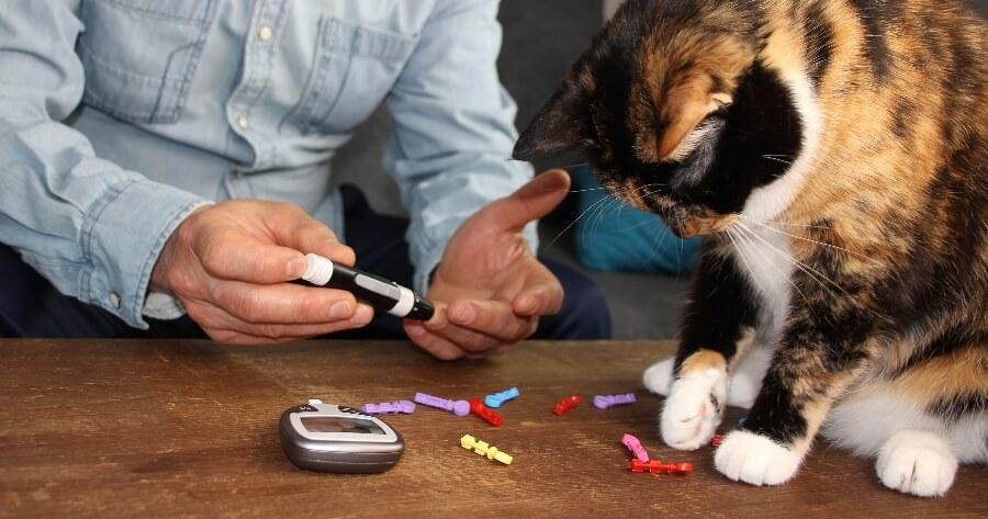 gato analisis de gucosa