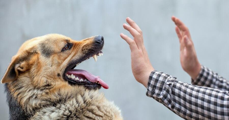 Qué hacer si mi perro mordió a una persona?: primeros pasos después de la agresión