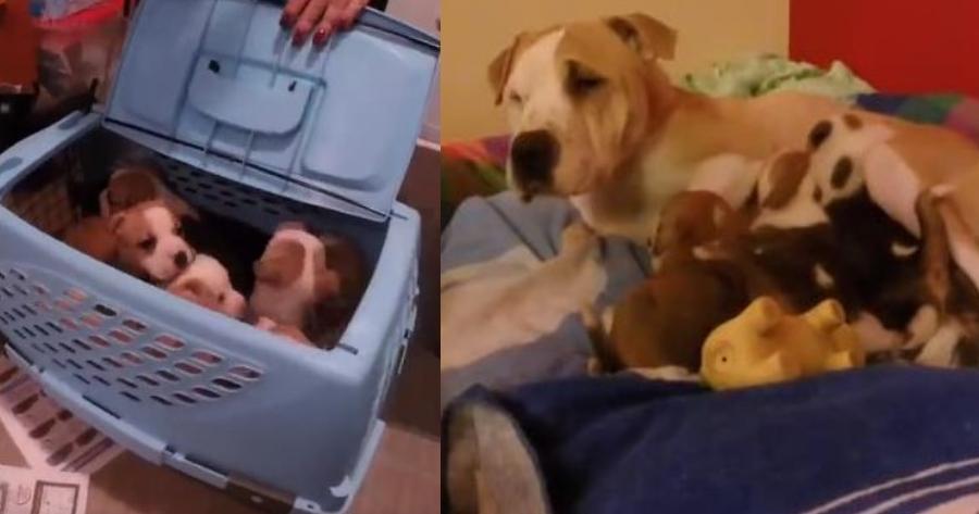 cachorros rescate