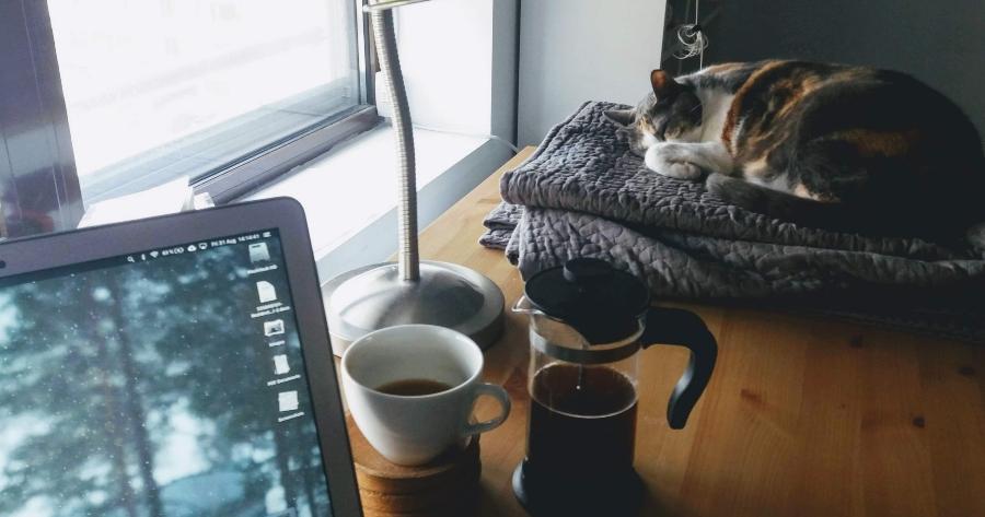 home office gato