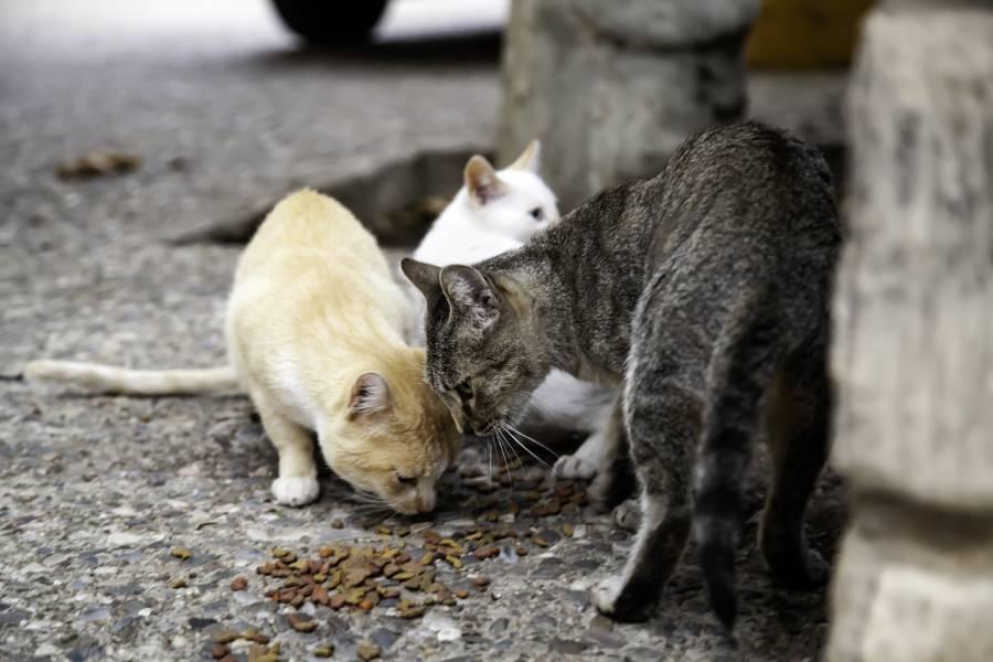 gatos abandonados en la calle