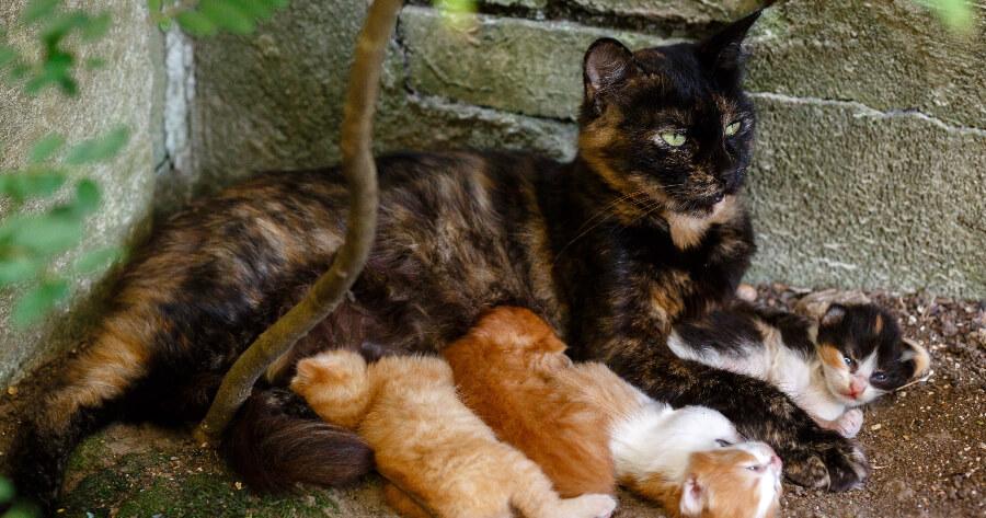 gata con sus gatitos