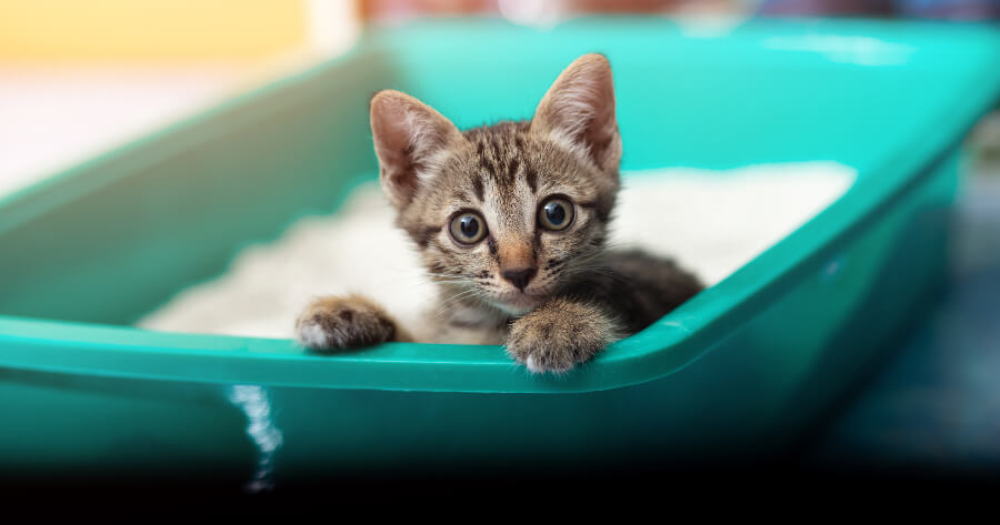 gatito en su arenero