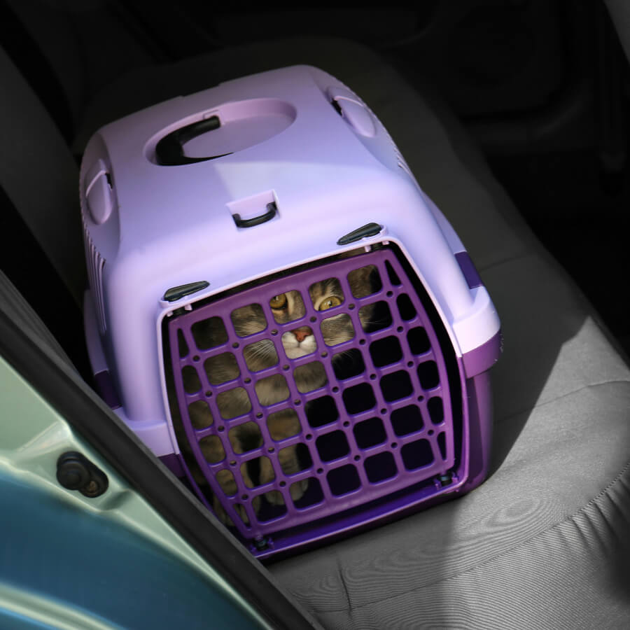 gato en transpotadora