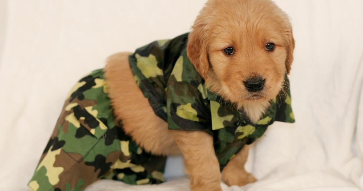 perrito soldado