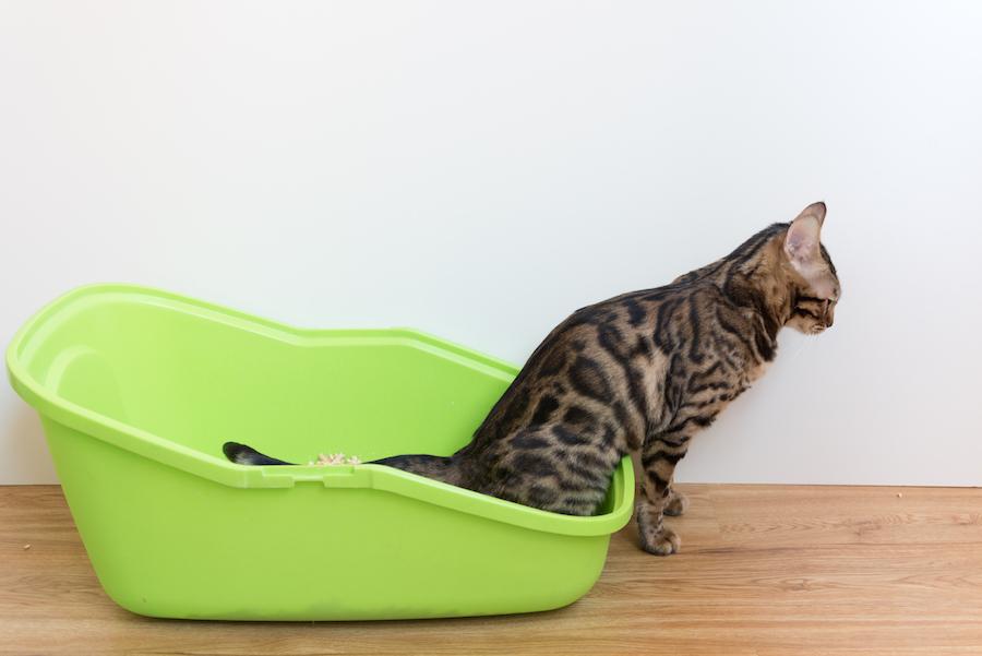 como eliminar el olor a orina de gato del ambiente