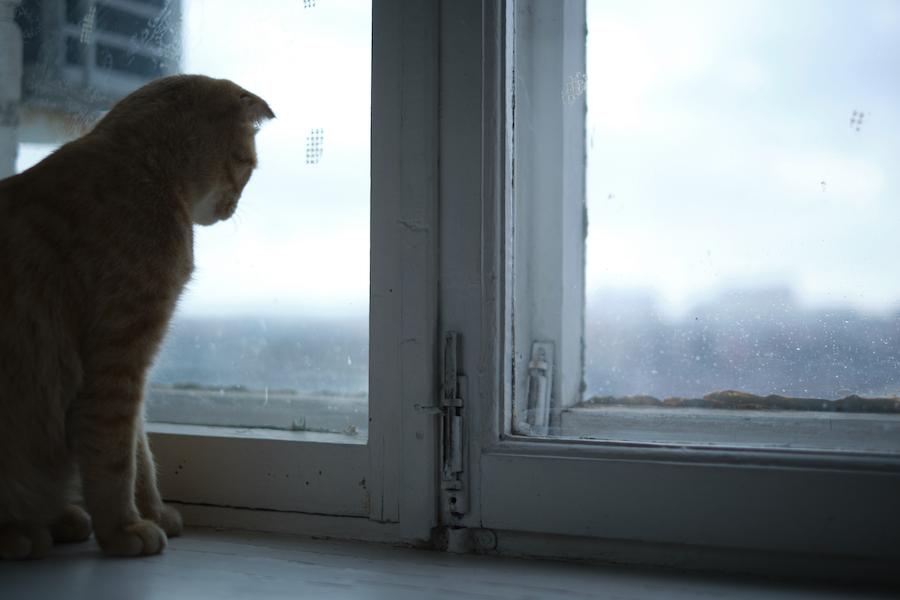gato anciano ventana