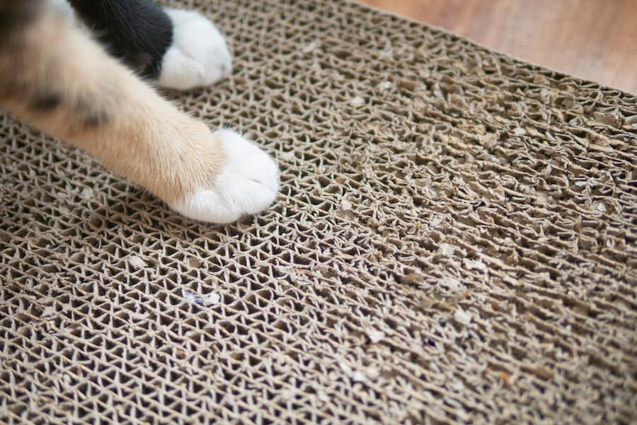 pata de gato en rascador