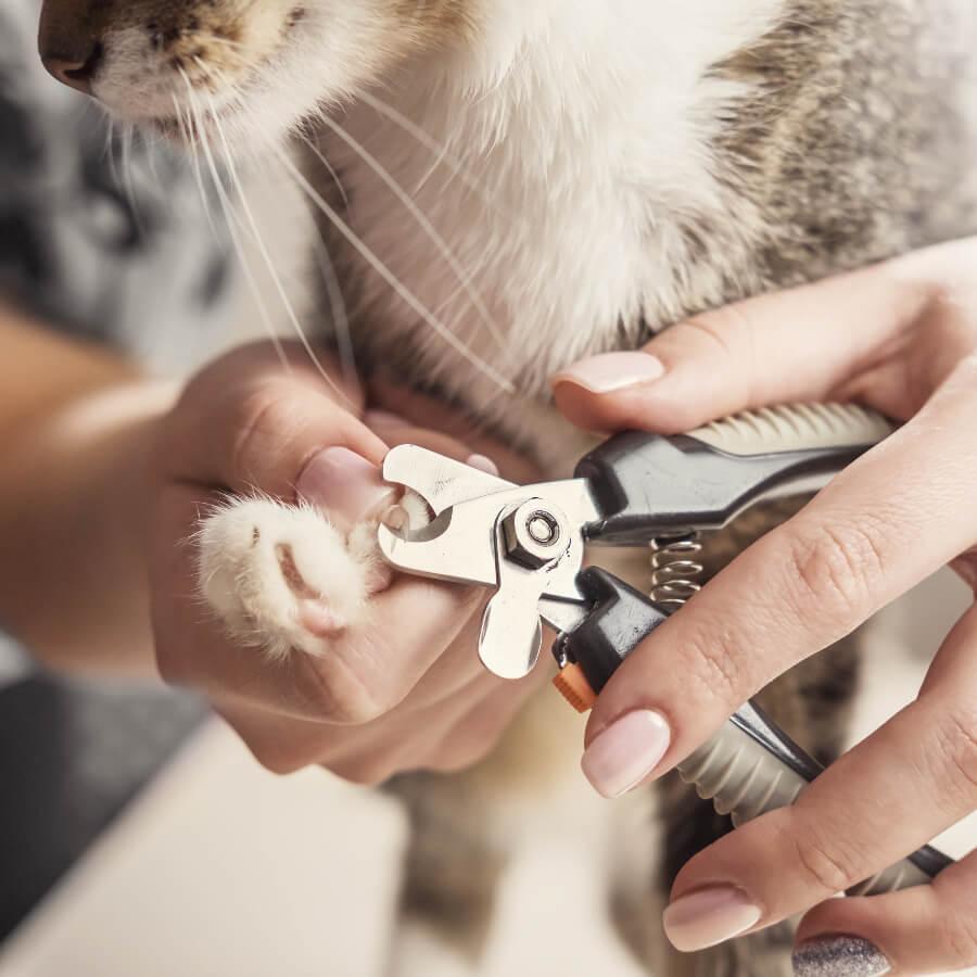 cortar uñas a gato