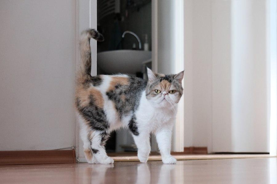 esterilizar a un gato por responsabilidad