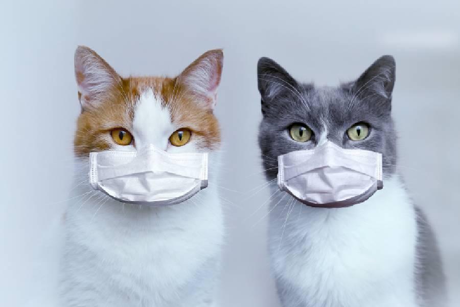 botiquin de urgencias para mascotas