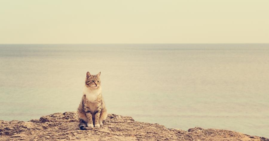 rescate gato mar