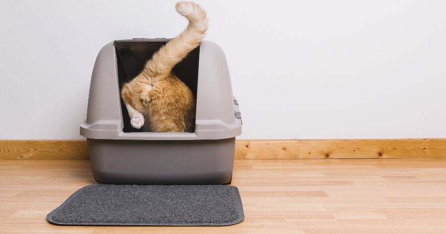 gato entra arenero