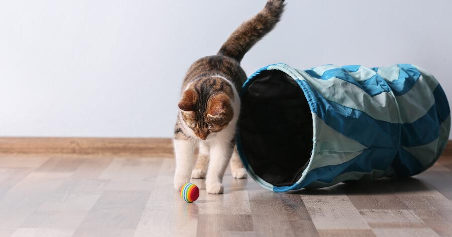 gato jugando con pelotita