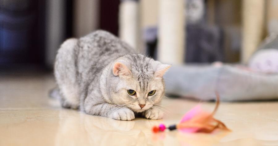 gato juguete de plumas