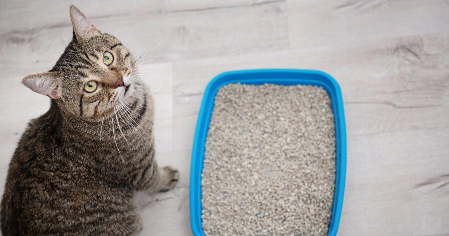 gato orina arenero