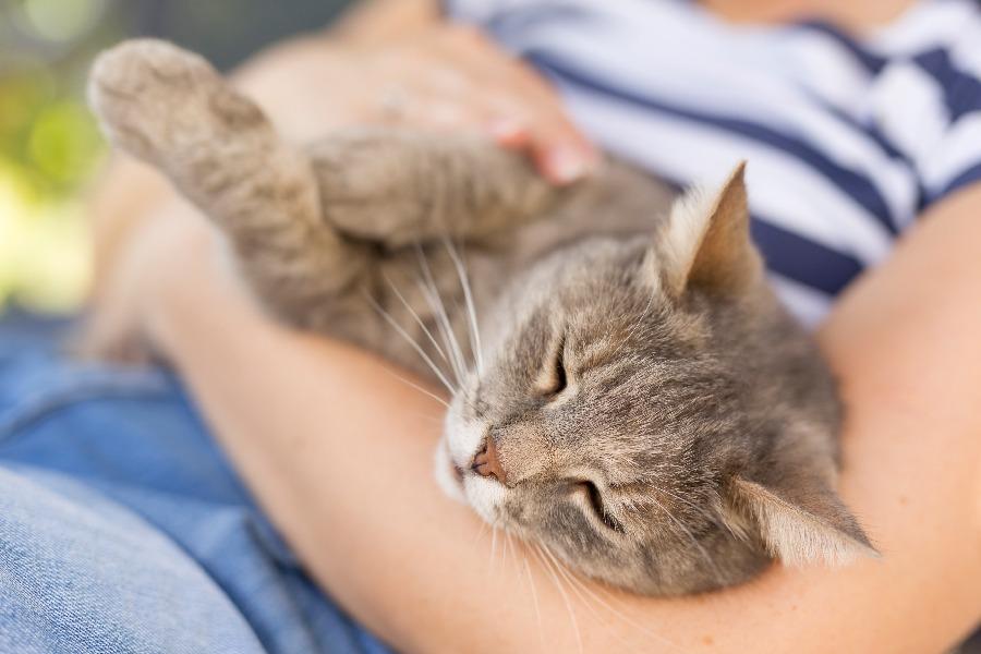 gato ronronea en brazos de humano