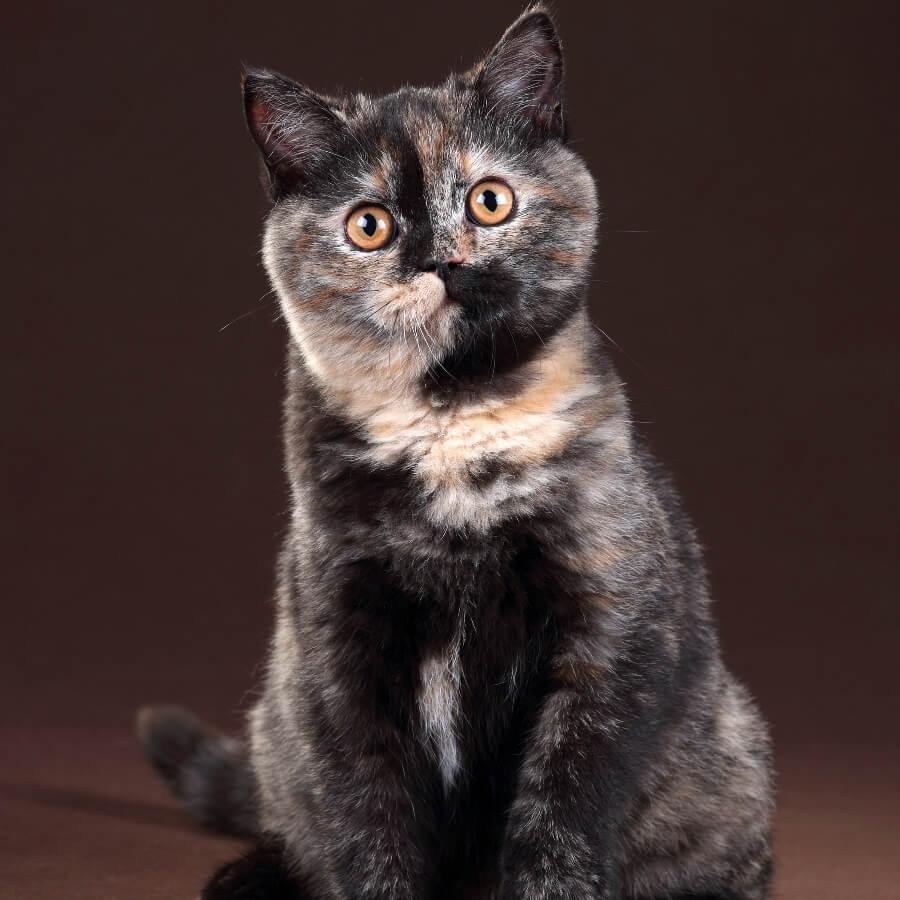 gato carey ojos