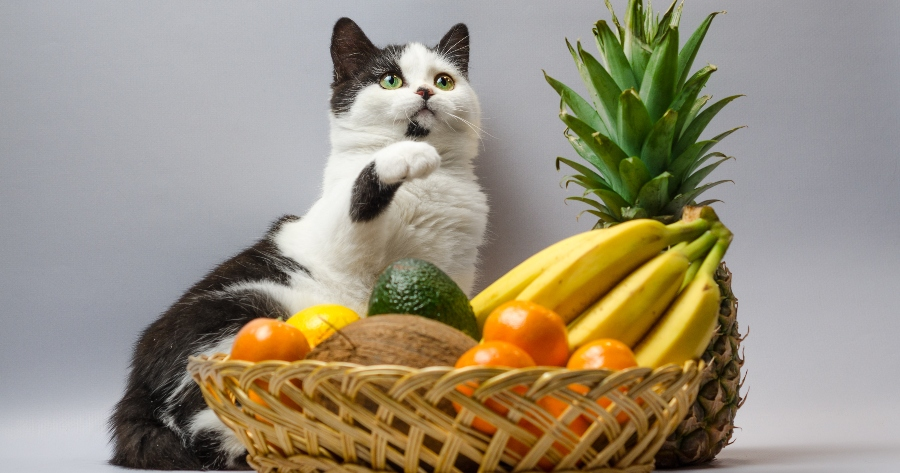 gato come frutas