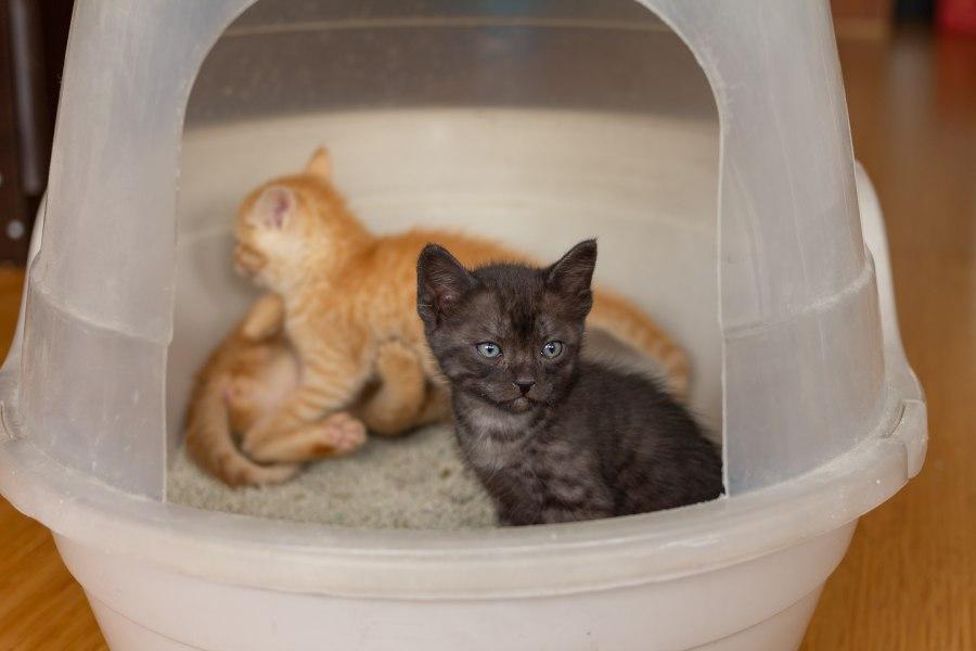 gatitos en arenero