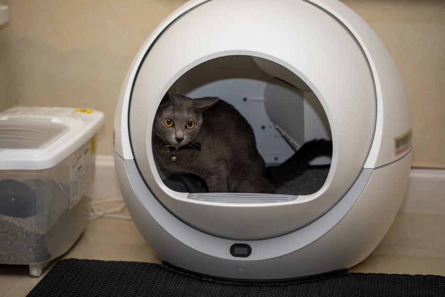 gato en arenero automático
