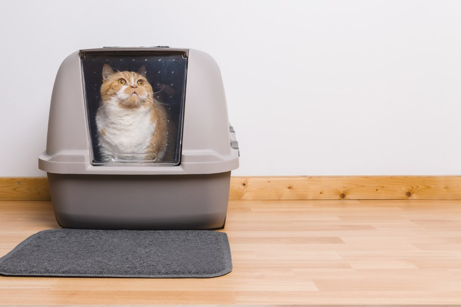 gato en arenero cerrado
