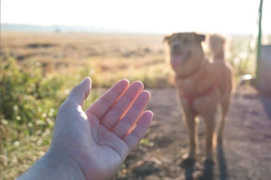 mano perro en el campo