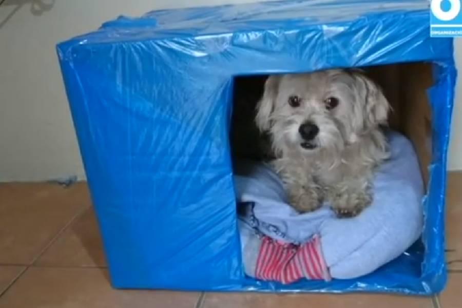 perro en caja de cartón