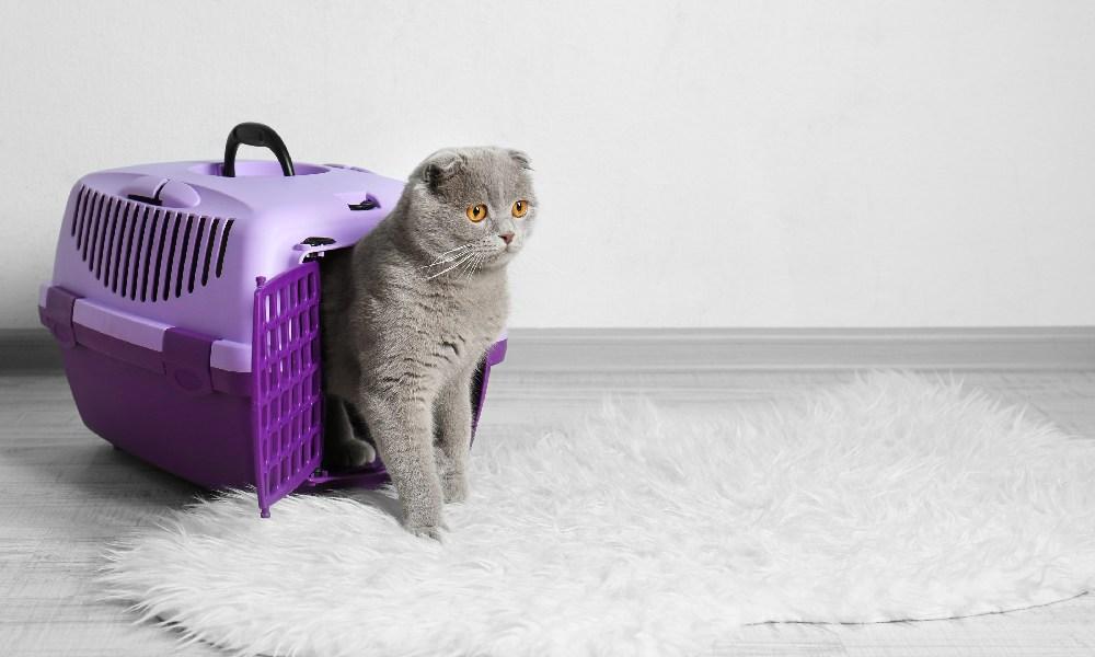 gato saliendo de transportadora