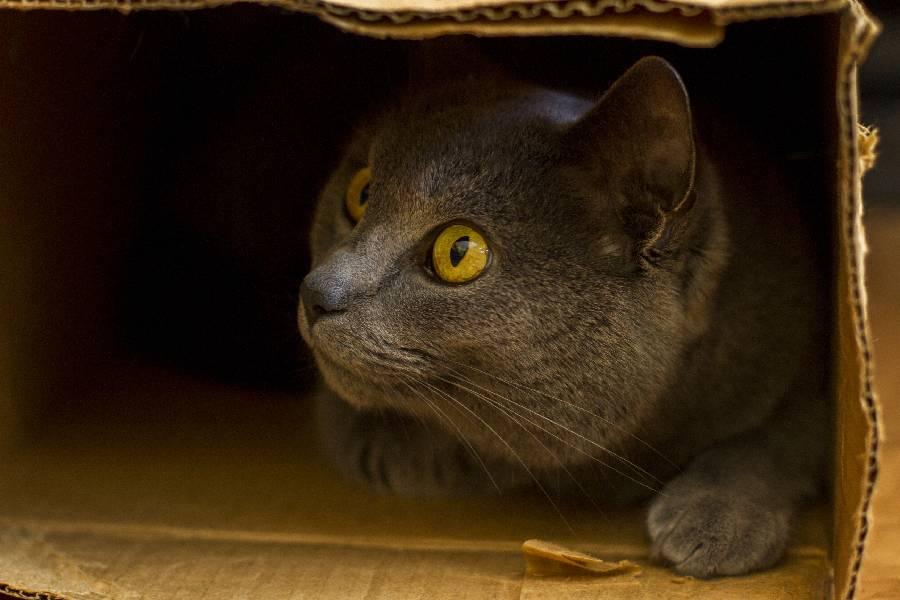 los gatos se asustan con los temblores