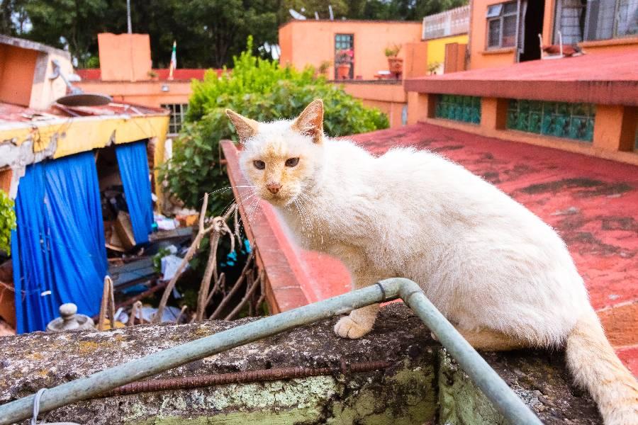 los gatos presienten los terremotos