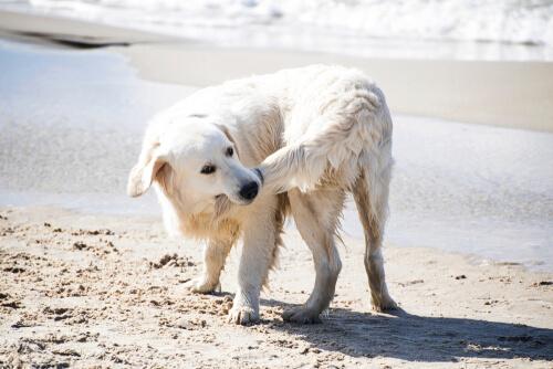 cane-bianco-si-morde-la-coda