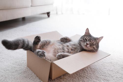 gatto-curioso-dentro-una-scatola