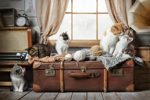 gruppo-di-gatti-a-casa
