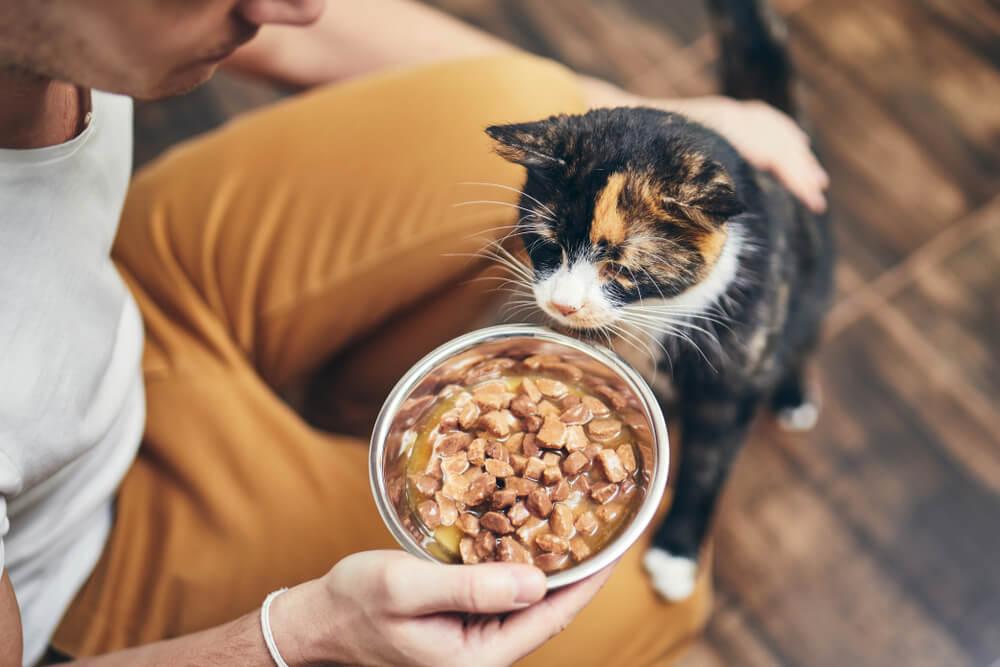 gatto cambia dieta con alimenti umidi