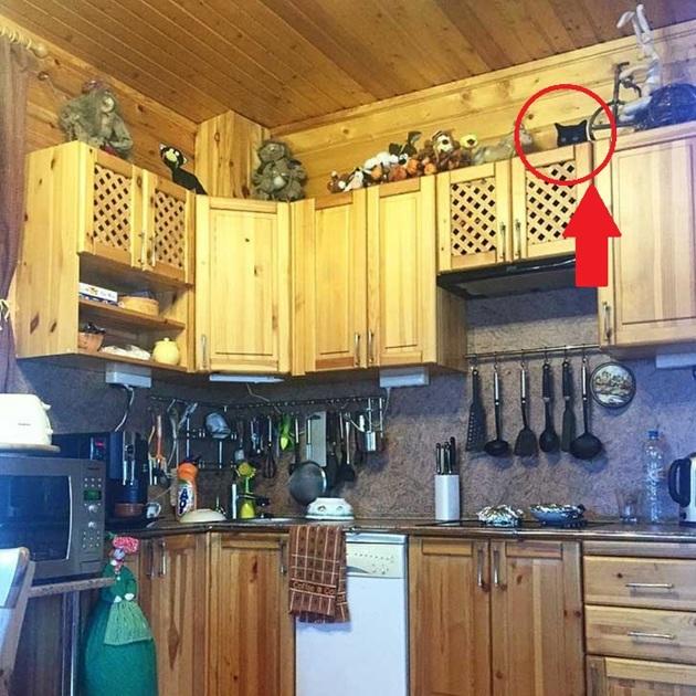 gatto-nero-nascosto-in-cucina