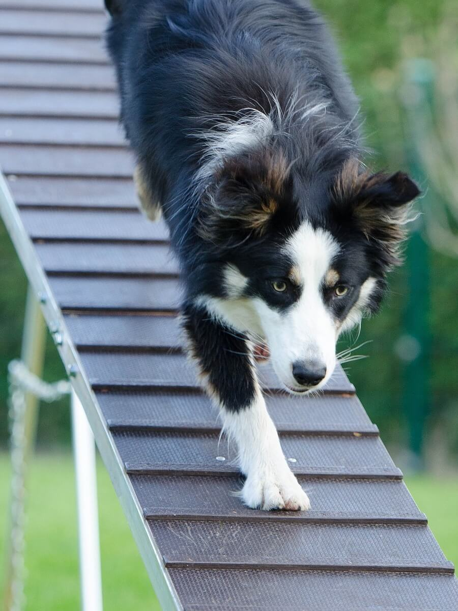 cane fa palizzata