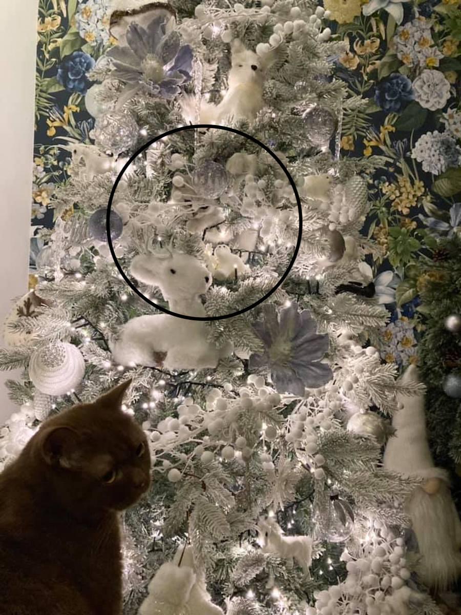 albero-e-gatto
