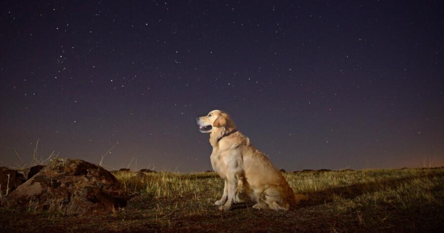 cane di notte in un campo