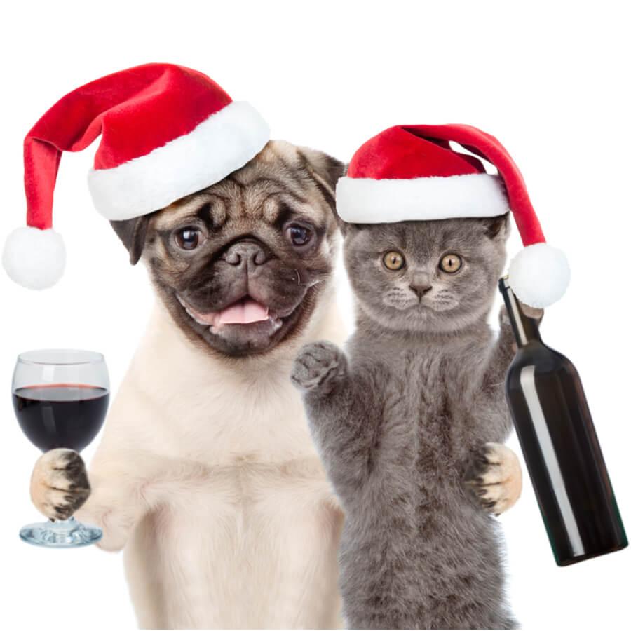 cane-gatto-con-bicchiere-di-vino