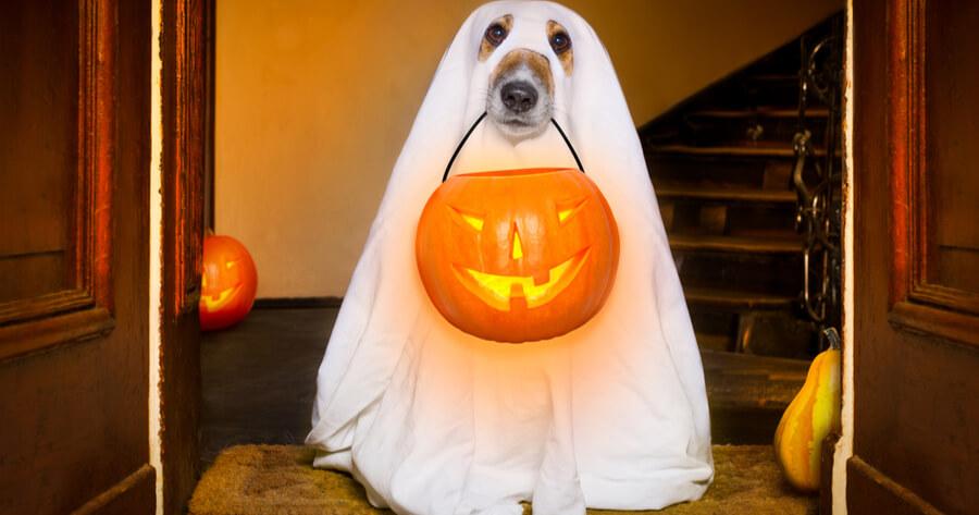 cane-con-lanterna-di-halloween